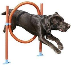 Rosewood Dog Agility Hoop Jump