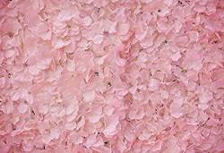 Yeele 10X8FT Pink Rose Petals Backdrop Vinyl Romantic Chic Flower Room Party Decoration Home Photography Background Maiden Adults Bridal Lady Artistic