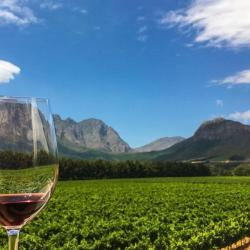 Winelands Celebration Experience - With Oysters & Champagne