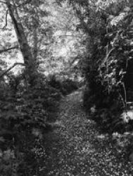 Robert Adams: An Old Forest Road Hardcover