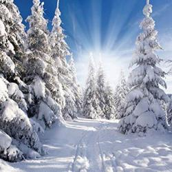 Sjoloon 10X10FT Winter Photography Backdrops Snow Covered Pine Photo Background Snow Photo Backdrops Studio Prop 11345